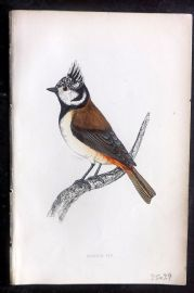 F. O. Morris 1867 Hand Col Print. Crested Tit